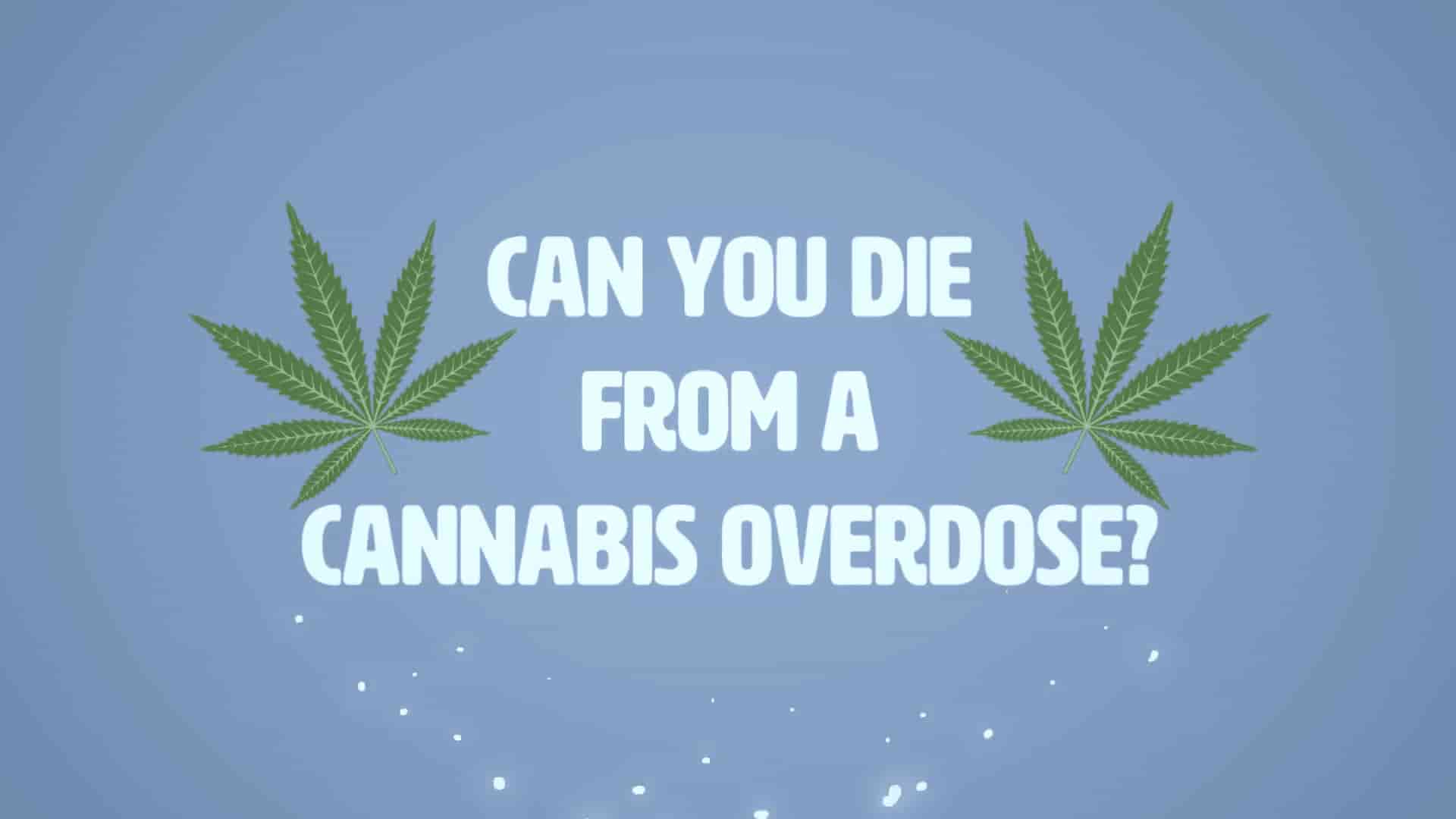 Can-u-Die-from-a-Cannabis-Overdose