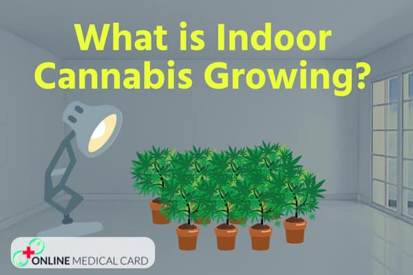 What is Indoor Cultivation ?