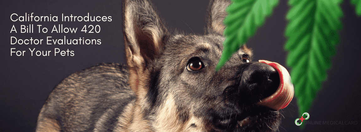 420 Doctor Evaluations For Your Pets