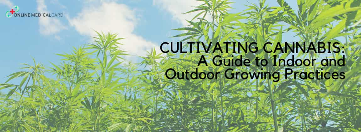 Cultivating Cannabis: A Guide into Indoor and Outdoor Growing Practices