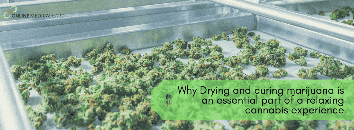 Drying and curing marijuana