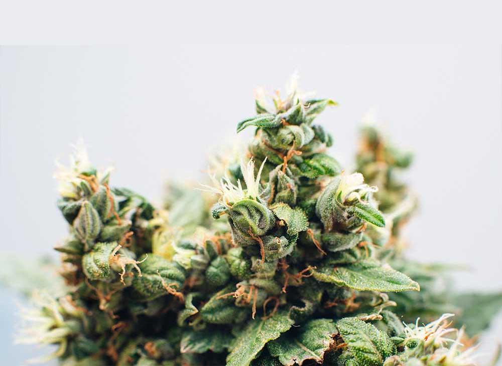 Flying-With-Medical-Marijuana
