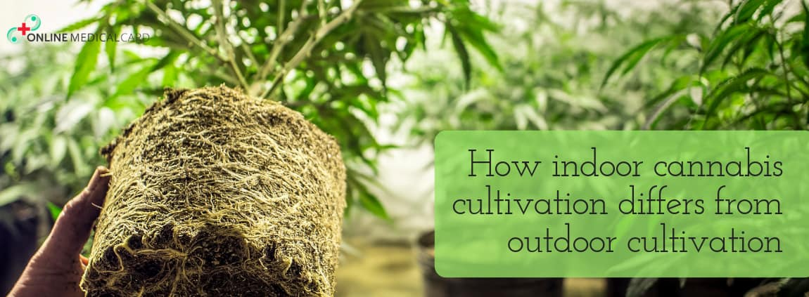 HOW INDOOR CANNABIS CULTIVATION DIFFERS FROM OUTDOOR CULTIVATION