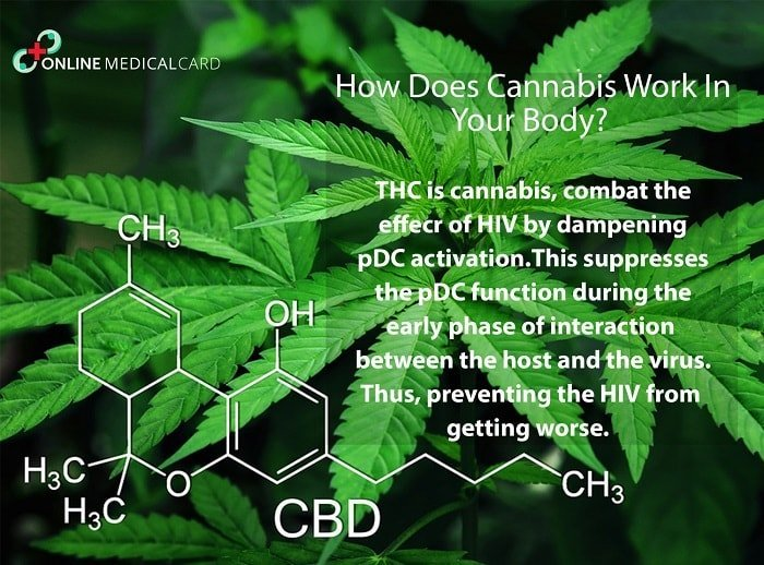 How does the cannabis work
