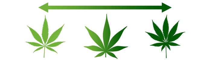 Marijuana Types