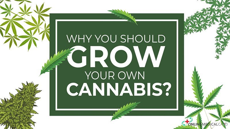 Growing own cannabis