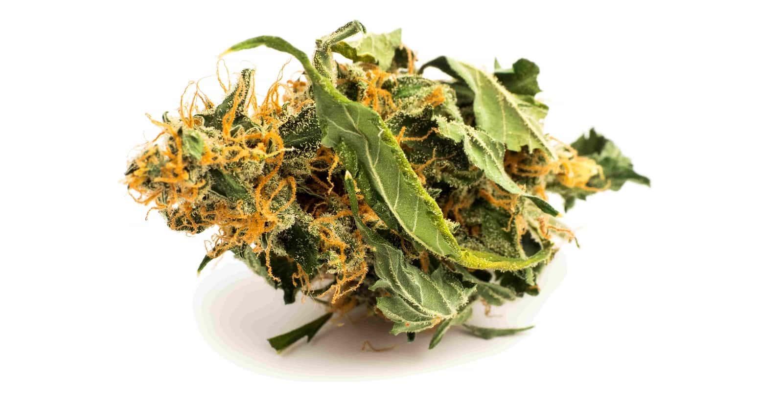 what are medical marijuana faq