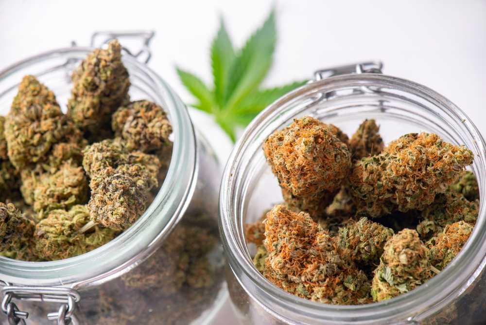 Pick the right strain