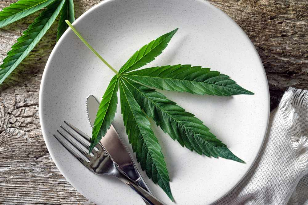 A Cannabis Doctor's Guide