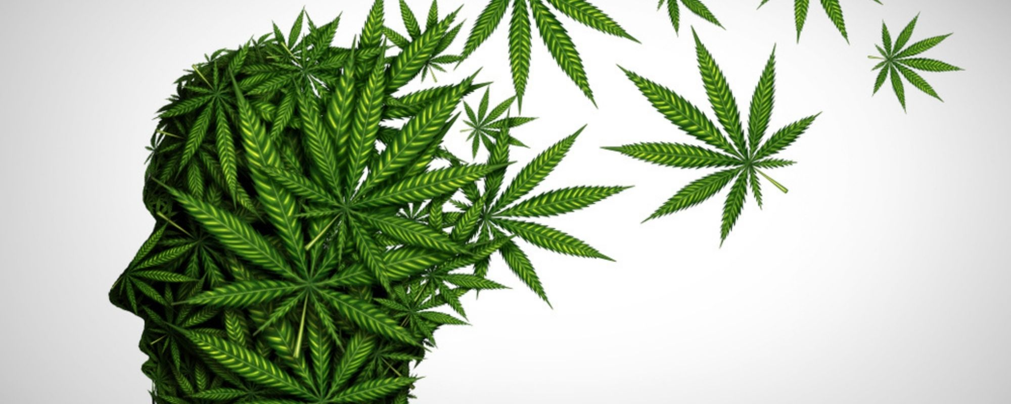 Does Cannabis Cause Memory Loss?