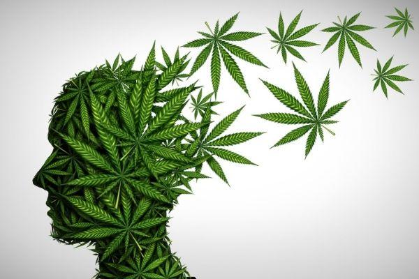 Does Cannabis Cause Memory defeciate