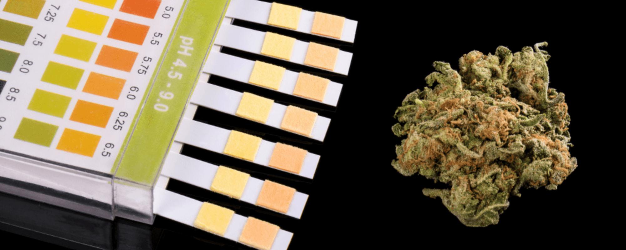 drug testing for cannabis