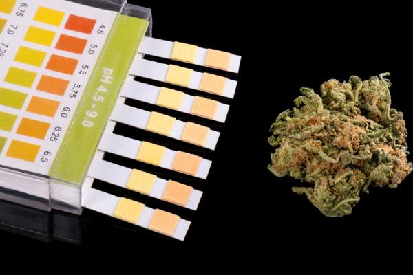 drug testing for cannabis suspended in Atlanta