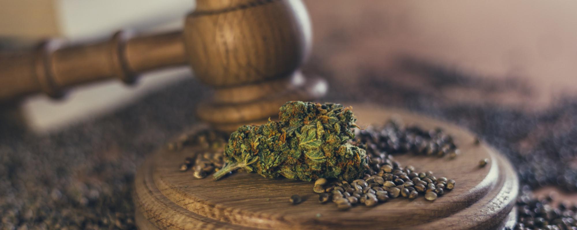 medical marijuana laws help